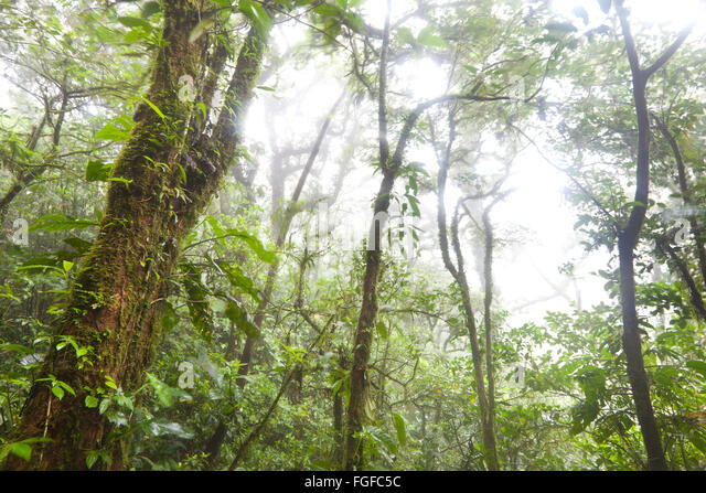 Misty and wet cloud forest at Cerro Gaital, near El Valle de Anton, Cocle province, Republic of Panama. - Stock-Bilder