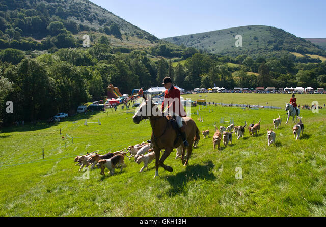 Huntsmen with hounds at Llanthony Show near Abergavenny Monmouthshire South Wales UK - Stock Image