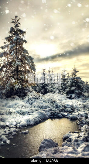 beautiful winter landscape with a pine tree and frozen puddle - Stock Image
