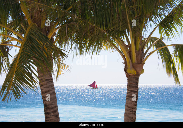 Sail boat between two palms Boracay; The Visayas; Philippines. - Stock Image