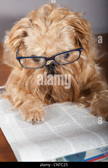 Dog Reading Newspaper Stock Photos Amp Dog Reading Newspaper