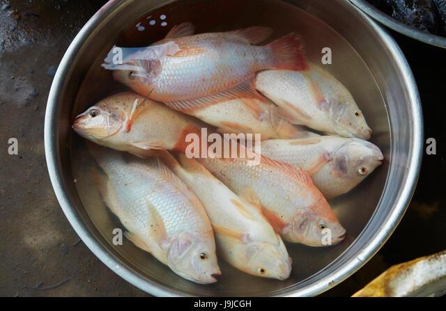 Asian fish markets stock photos asian fish markets stock for Chinese fish market near me