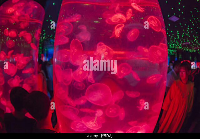 Changchun, China. 18th August, 2017. More than 5,000 jellyfish can be seen at a jellyfish exhibition in Changchun, - Stock Image