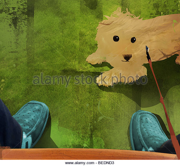 Owner looking down at pet dog on leash - Stock Image