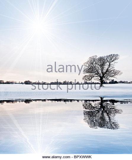 snow tree landscape reflection - Stock Image