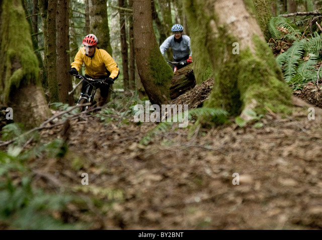 Two mountain bikers out riding a single track trail through the forest. - Stock Image