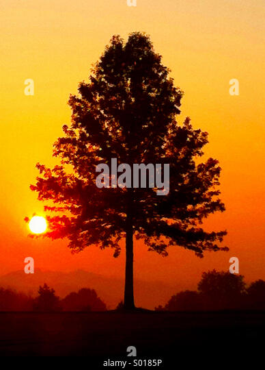A silhouette of a tree set against an orange morning sunrise - Stock Image