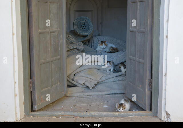 Cats, Shah Nematollah Vali Shrine, Mahan (Iran) - Stock Image