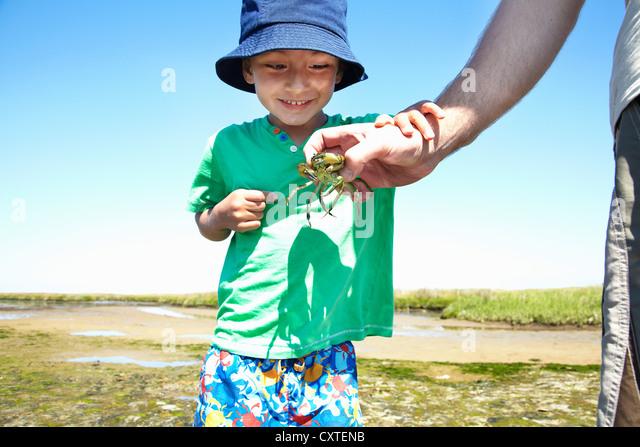 Boy examining crab in fathers hand - Stock-Bilder