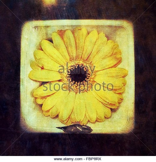 Close-Up Of Yellow Flower - Stock Image