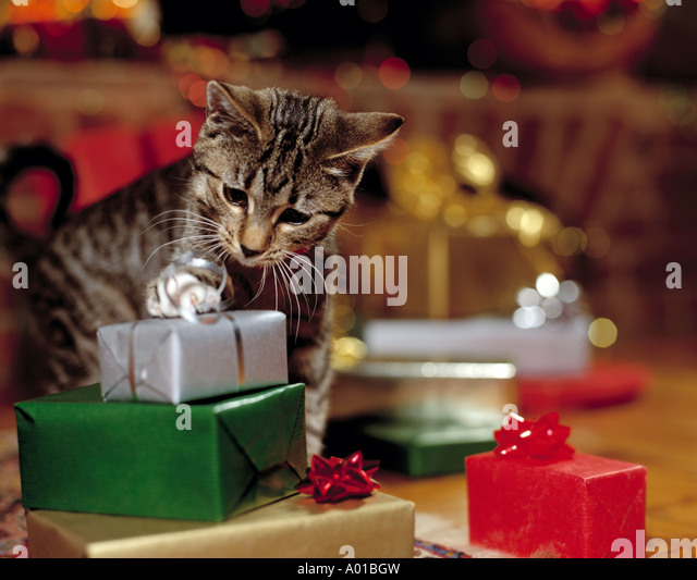 Kitten playing with Christmas Presents - Stock Image