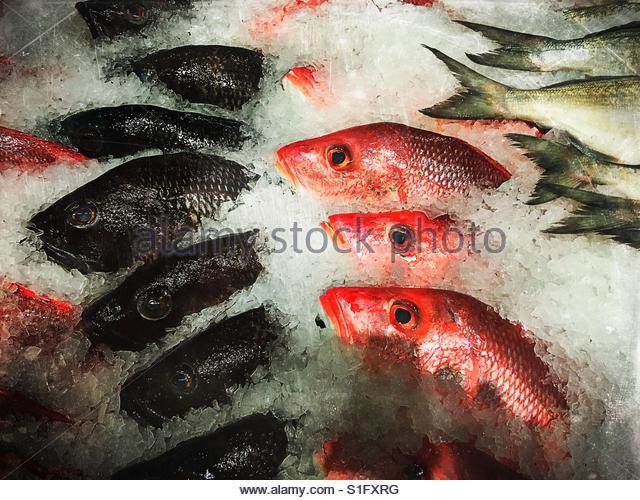 Fresh fish on display in market. - Stock-Bilder
