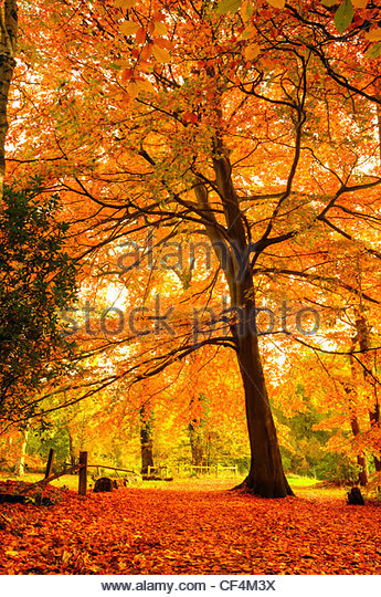 Intense autumnal colours from leaves in a forest. - Stock-Bilder