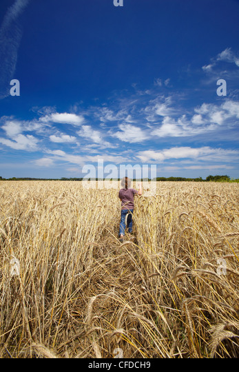 Boy running in wheat field, France, Europe - Stock Image