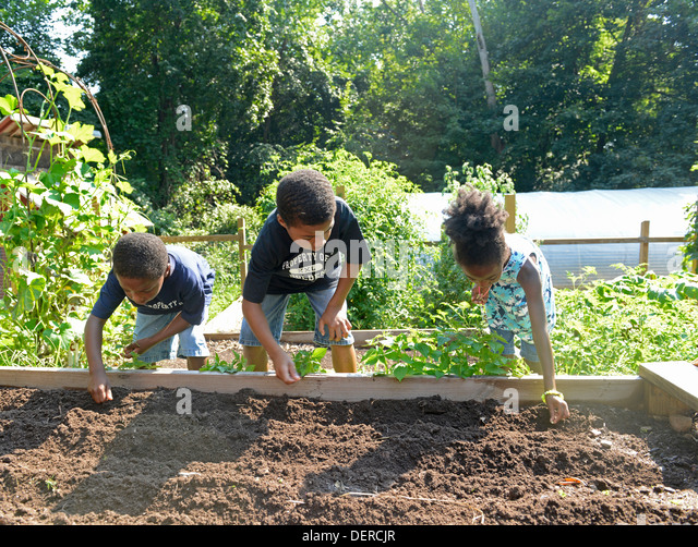 Black children from New Haven practice planting lettuce at Common Ground High school, an environmental charter school. - Stock-Bilder
