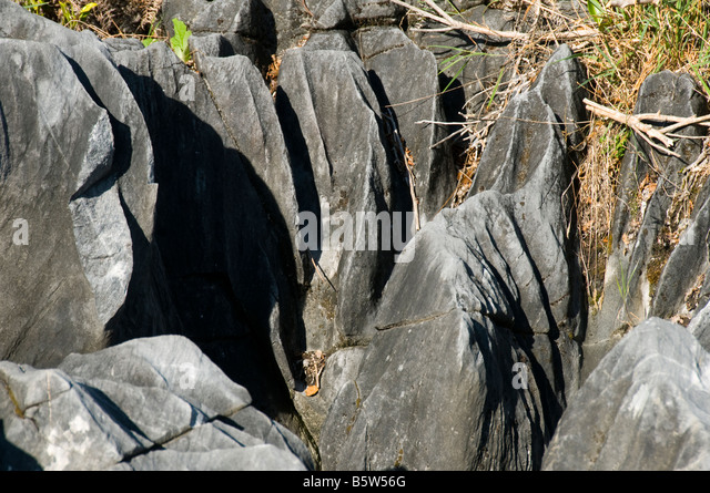 Limestone grykes near the northern end of South Island, New Zealand - Stock Image