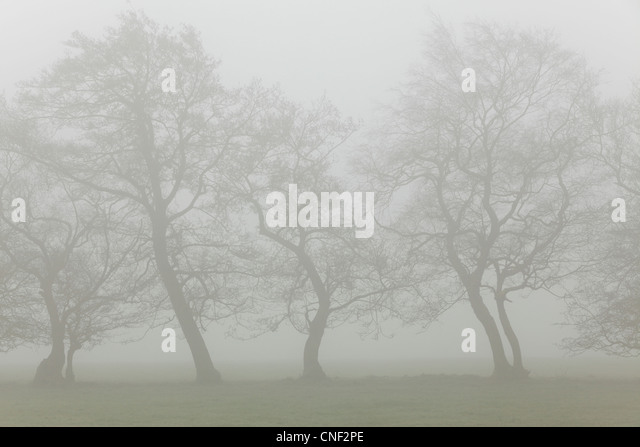 Silhouettes of fog-shrouded trees on a misty spring morning in Yorkshire - Stock Image