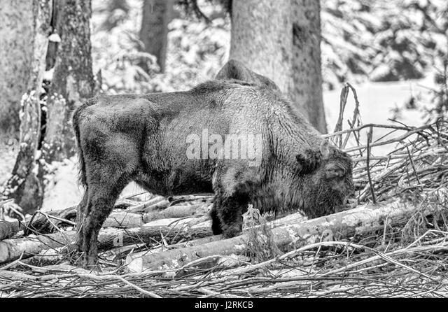 bison black singles Black bison contracting, llc | homeadvisor prescreened gutter contractors, roofing contractors in omaha, ne.