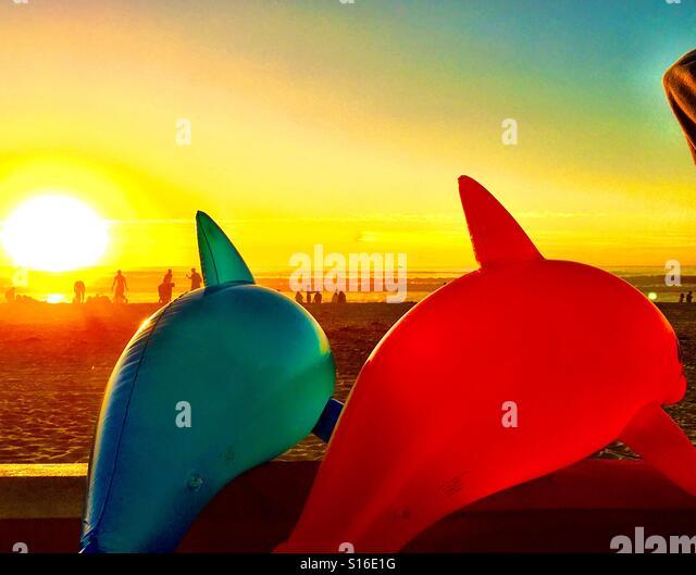 Dolphin Life - Stock-Bilder