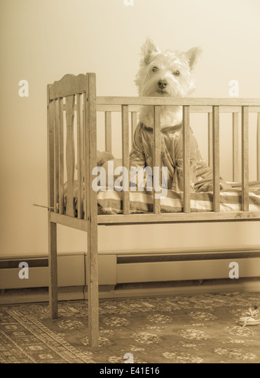A small white dog wearing pajamas inside a baby crib in sepia tone. - Stock Image