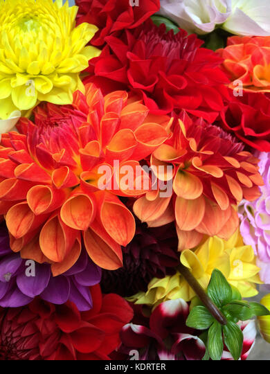 A bunch of colorful flowers - Stock Image