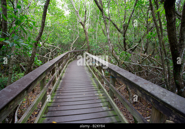 pathway through Everglades National Forest, Florida, USA - Stock-Bilder