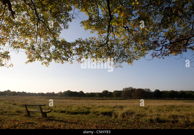 Bench in a peaceful grassland - Stock Image