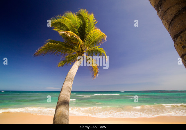 Palm tree at Uvero Alto near Playa Del Macao and Punta Cana in Dominican Republic - Stock Image