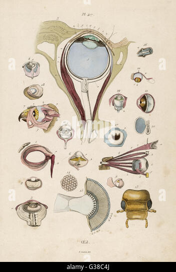 Date: circa 1850 - Stock-Bilder