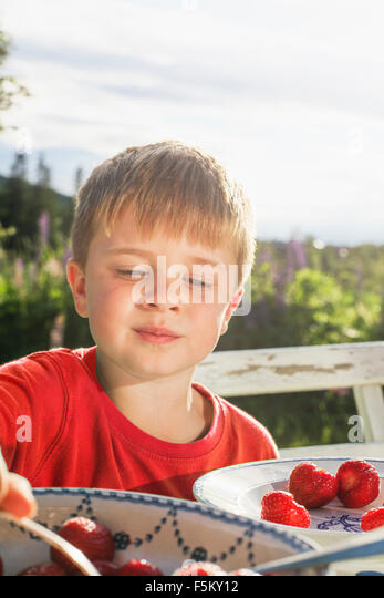 Sweden, Halsingland, Jarvso, Boy (4-5) eating strawberries in garden - Stock Image