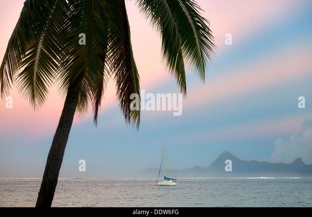 Palm tree sailboat, sunrise and the Island of Moorea. Tahiti. French Polynesia - Stock Image