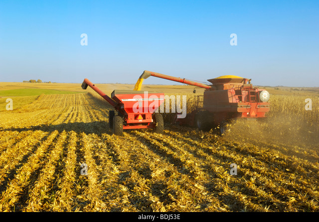 Agriculture - A combine harvests grain corn in Autumn while augering the crop into a grain cart on-the-go / Iowa, - Stock-Bilder