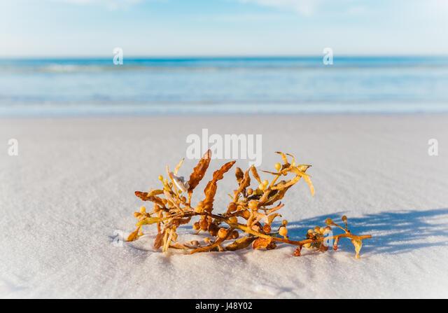 Seaweed washed up on empty white sand beach. - Stock Image