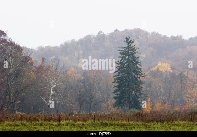 Autumn Color and Fog at Clark State Forest in Clark County, Indiana - Stock Image