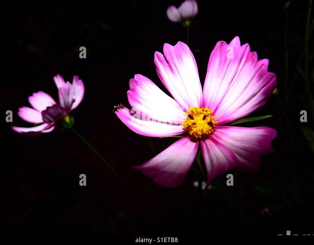 Flower - Stock Image