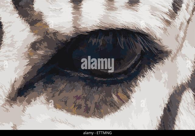 Vector illustration of zebra eye. Oil painting style. - Stock Image