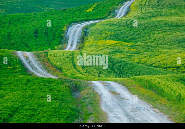 dirt road trough hilly and green field landcape, Italy, Tuscany, Val d Orcia, San Quirico d Orcia - Stock Image
