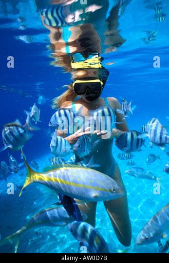 woman snorkeler feeding fish underwater Bonaire netherlands antilles - Stock Image