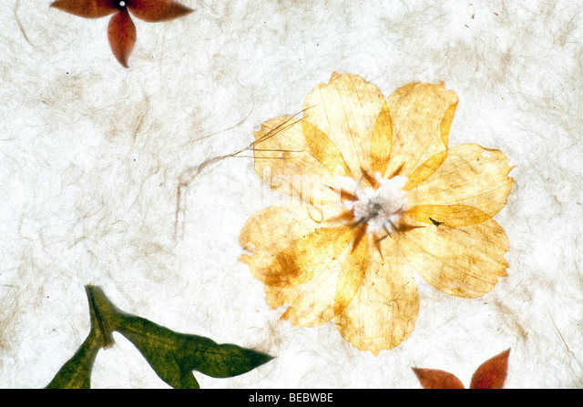 handmade paper background with flowers and textures - Stock Image