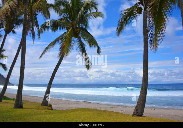 palm beach, Reunion - Stock Image