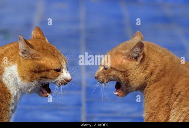 cat car games