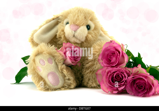 Cute fluffy bunny with pink roses - Stock Image
