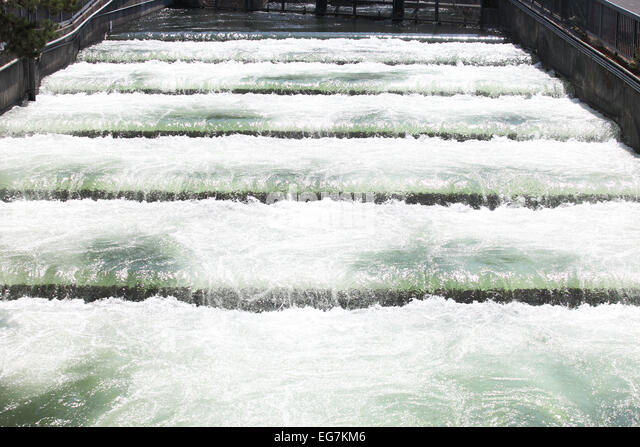 Fish ladders stock photos fish ladders stock images alamy for Fish count over bonneville dam
