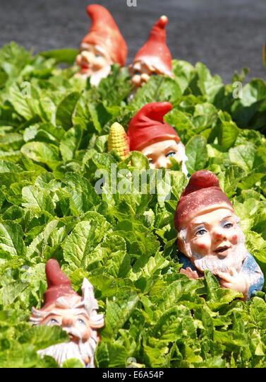 garden gnome,dwarf,bourgeois - Stock Image