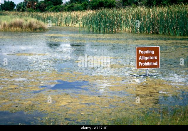 St Marks national wildlife refuge - Stock Image