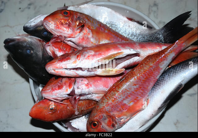 Bass and red mullet stock photos bass and red mullet for Red mullet fish