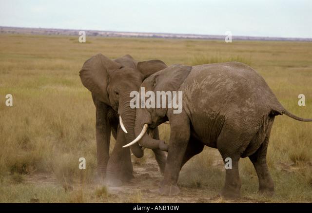 Engaged Animal Stock Photos & Engaged Animal Stock Images ...