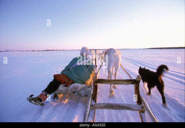reindeer sleigh norway stock photos reindeer sleigh. Black Bedroom Furniture Sets. Home Design Ideas
