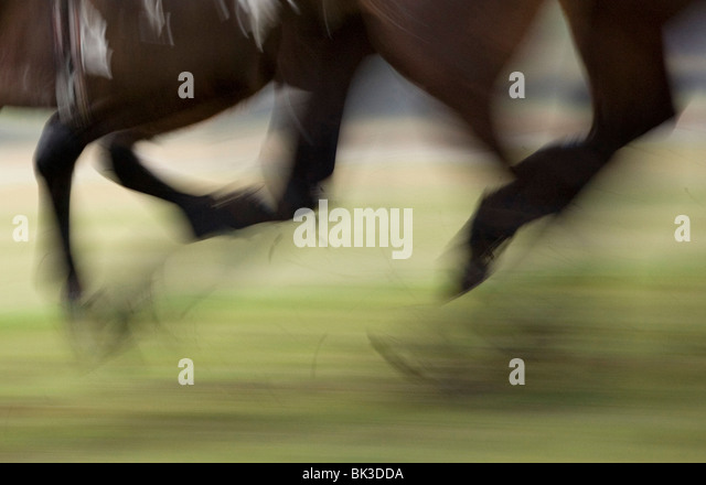 Horses hooves in a race - Stock-Bilder