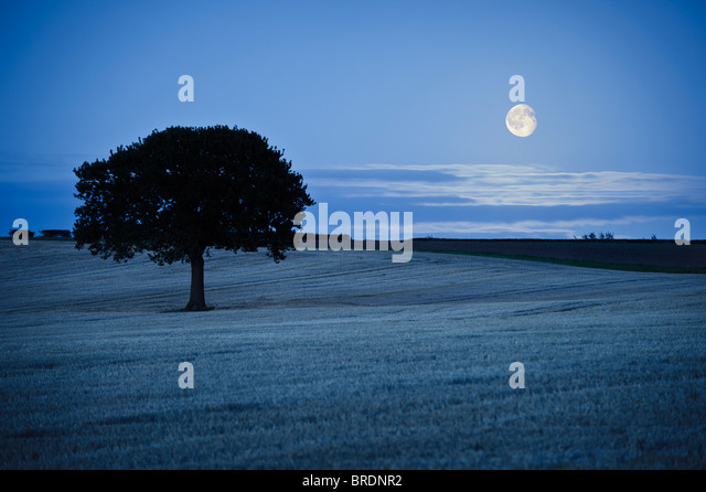 Lone tree in field and Moonrise - Stock Image